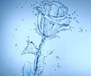 water, rose, and flower image