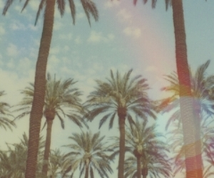 palms, summer, and vintage image
