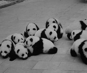 panda, adicione mais tags, and sex image