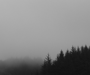 black and white, mist, and nature image