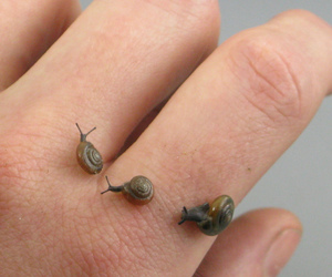 snail and hand image