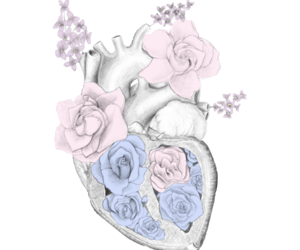 daw, flower, and heart image