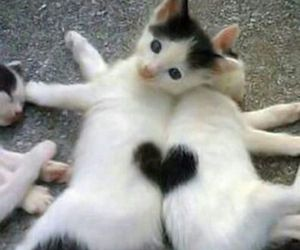 best friends, black and white, and cat image