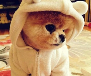 worlds cutest dog, bear suit, and boo image