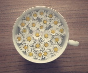 flowers, cup, and daisy image