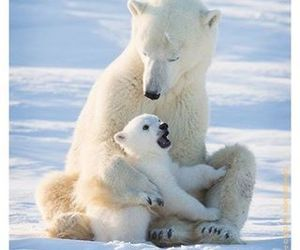 animals, bear, and baby image