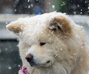 adorable, cold, and snow image