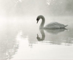 buckinghamshire, calm, and misty image