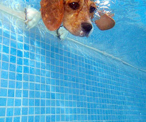 dog, water, and pool image