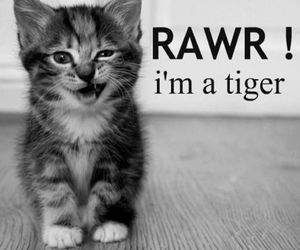 cat, tiger, and rawr image