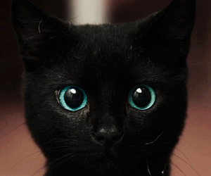 awww, black, and blue eyes image