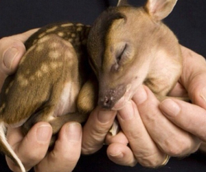 baby, deer, and fawn image