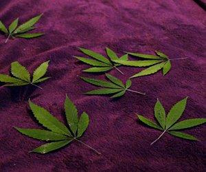 ganja, marijuana, and pot image