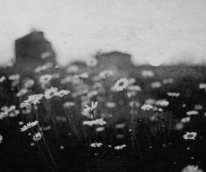 flowers, black and white, and daisy image