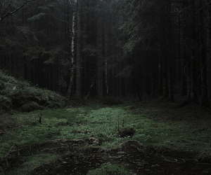 dark, woods, and forest image