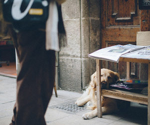 dog, vintage, and photography image