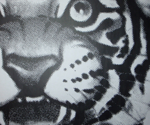 print and tiger image