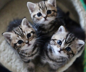 animal, cats, and cute image