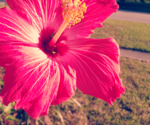 flower, life, and nature image
