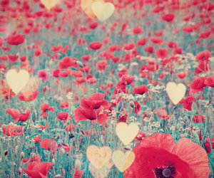 flowers, red, and heart image