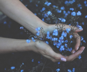 blue, blue flowers, and flowers image