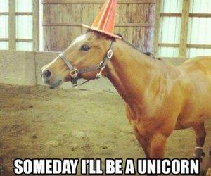 unicorn, horse, and funny image
