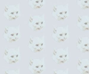 background, cat, and cats image