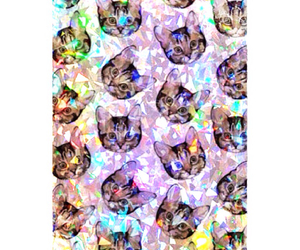 cats, tumblr, and background image