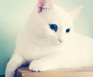 white, cat, and cute image
