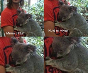 vic fuentes, Koala, and ptv image