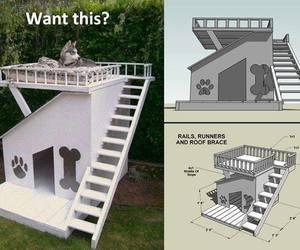 dog, dog house, and house image