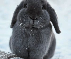 bunny, cutie, and sweet image