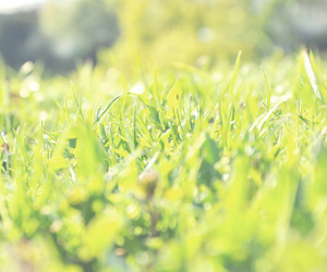 grass, green, and summer image