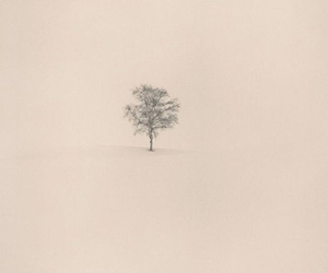 tree, alone, and nature image