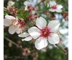 blossom, decor, and etsy image
