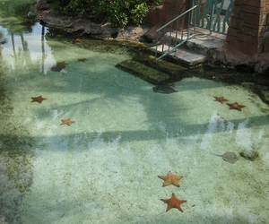 water, starfish, and nature image