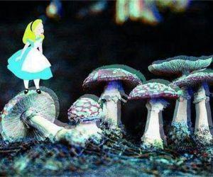alice, shrooms, and wonderland image