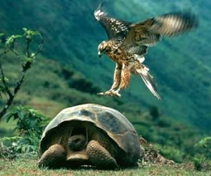 animals, funny, and tortoise image