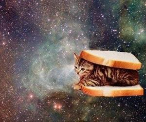 cat, galaxy, and sandwich image