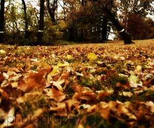 fall, leafs, and outdoors image
