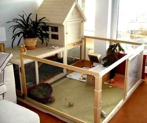 guinea pig and house image