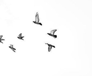 bird, fly, and drawing image