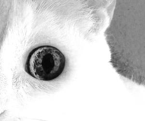 pff kittyeye image