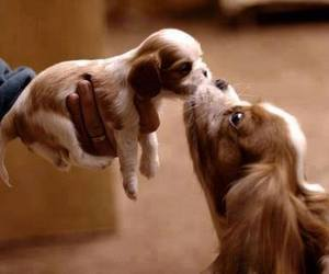 dog, puppy, and kiss image