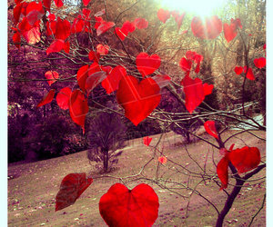 hearts, nature, and heart image