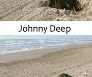 funny, johnny depp, and lol image