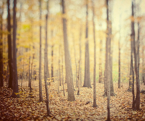 autumn, woods, and blur image
