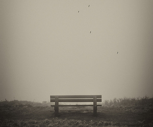 b&w, bench, and silence image