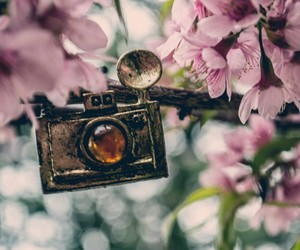flowers, camera, and nature image