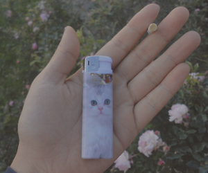 smoke, cat, and cigarette image